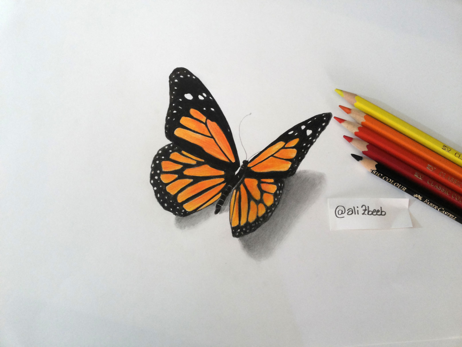 Butterfly - Colored pencils - Ali Zbib
